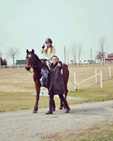 Introductory Equine Lessons (Horseback Riding)