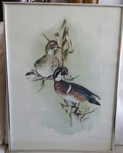 """Just Restin"" - Wood Ducks by Frank Jordan"