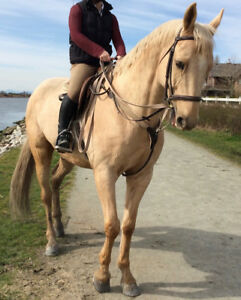 Beautiful Palomino horse for part lease in Southlands