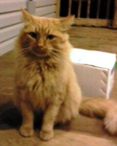 Chat abandonné cherche famille