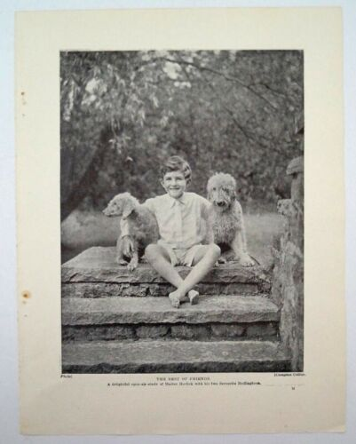 VINTAGE BEDLINGTON TERRIER DOG PHOTO PRINT - THE ARRIVAL & THE BEST OF FRIENDS