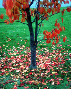 Contact John Wright's Lawn Services for LEAF REMOVAL Sarnia Sarnia Area image 3