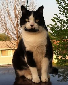 Poopy Is Still Missing!!! Male Adult Black And White Cat.
