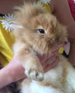 Baby bunny free to a good home