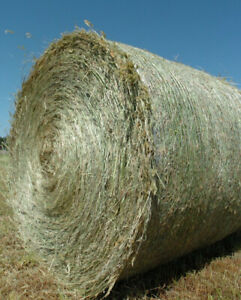 ISO:  Round Bales, Horse Quality