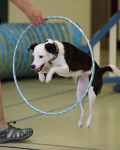 Novice Trick Dog Class starting Monday January 8th in Belleville