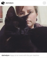 Lost black cat - north and windsor