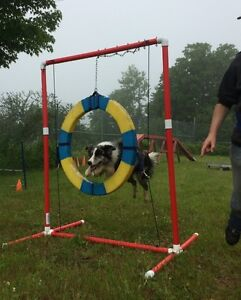 PRE-AGILITY FOUNDATION CLASS, STARTS SEPTEMBER 25TH