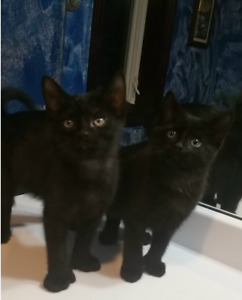 8WEEK OLD KITTENS NEED A LOVING HOME