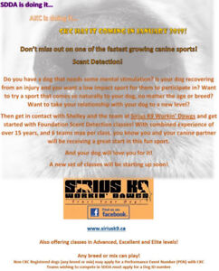 Scent Detection Training Classes for Dogs