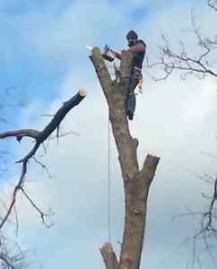 ** KINGDOM TREE SERVICES ** [GTA] TREE CUTTING, PRUNING, REMOVAL