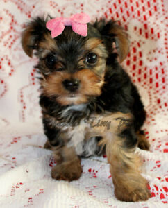 Adopt Dogs & Puppies Locally in Winnipeg | Pets | Kijiji Classifieds