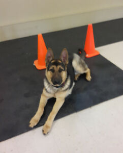 OBEDIENCE CLASSES- K9 KOMFORT  INN