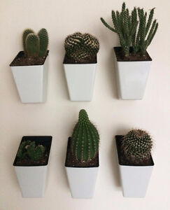 Wall hanging Planters with Plants