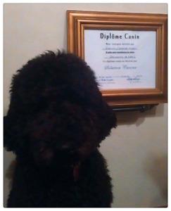 Dressage à domicile pour chien