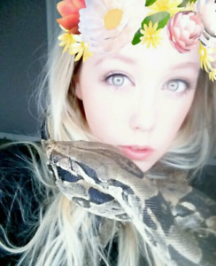Looking for my 2 old boas