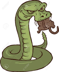 Cherche rongeurs pour serpents/Seeking rodents for snakes