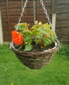 Summer hanging baskets and planters