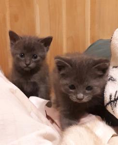 Chattons/ Kittens