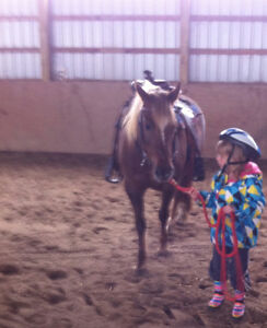 NEW FOREST PONY to sell! Kitchener / Waterloo Kitchener Area image 1