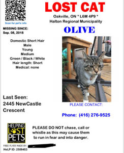 Brown and white Tabby - lost cat