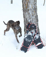 Snowshoeing with your Dog Classes
