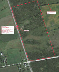 37 ACRES ON MAINTAINED RD. WITH 1700' OF FRONTAGE-$109,000.00