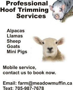 HOOF TRIMMING SERVICES, for your sheep and goats