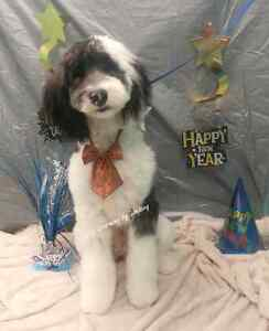 January Special ! Professional dog and cat grooming  Cambridge Kitchener Area image 3