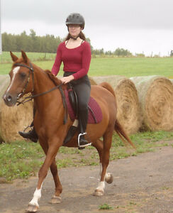 ARAB MARE FOR SALE - FORMER LESSON HORSE FOR BEGINNERS