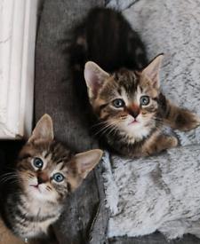 Healthy kittens