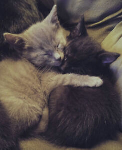 Kittens!! looking for a home this Holiday Season (trained)