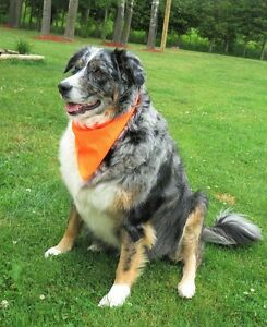 Dog Grooming & Boarding Kennel Services (Open House Oct 23/16)