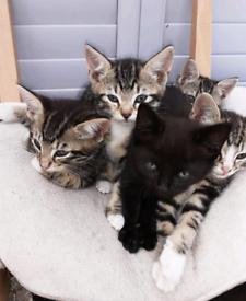 5 lovely kittens 10 weeks old
