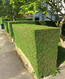 Gardening/Tree surgery