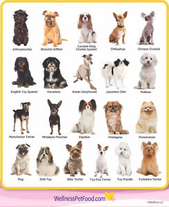 I am looking to buy a small breed dog