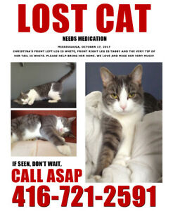 LOST CAT - Still Missing from Burnhamthorpe and Fieldgate