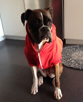 Red dog sweater - medium - by American Apparel for dogs