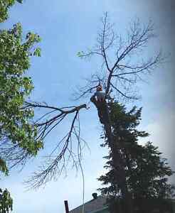 ** AFFORDABLE TREE REMOVAL . .50% OFF!! SEPTEMBER SPECIAL!!