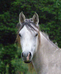 Looking for horse boarding Wendover-Alfred.