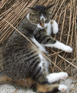 Lost cat in Millgrove.  Have you seen her?