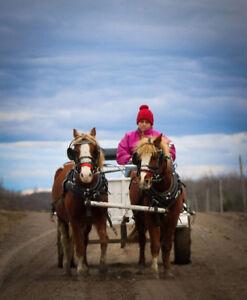 team de poney a vendre
