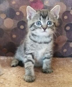 *** Adorable Kittens with Shots  ***