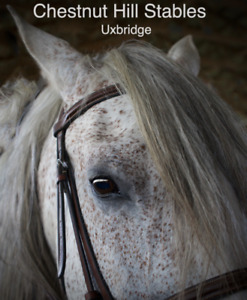 Horse Boarding | Find or Advertise Pet & Animal Services in Ontario