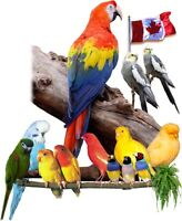2015 Canadian National Cage Bird Show