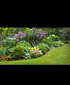 Gardening maintenance / gardener