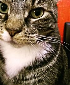 Cat/Pet sitter in London/N15/Seven Sisters, Hackney/Haringey