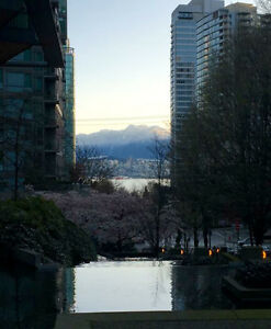 Coal Harbour apartment ideal for business professional