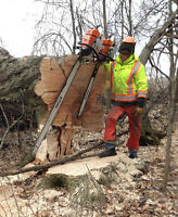 Tree Removal & Maintenance, Milling, Live Edge Lumber