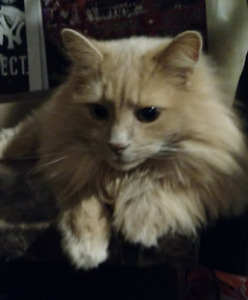 Missing Cat in Warsaw area